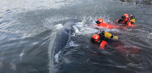 INSOLITE : Une baleine en balade dans le vieux port de Marseille